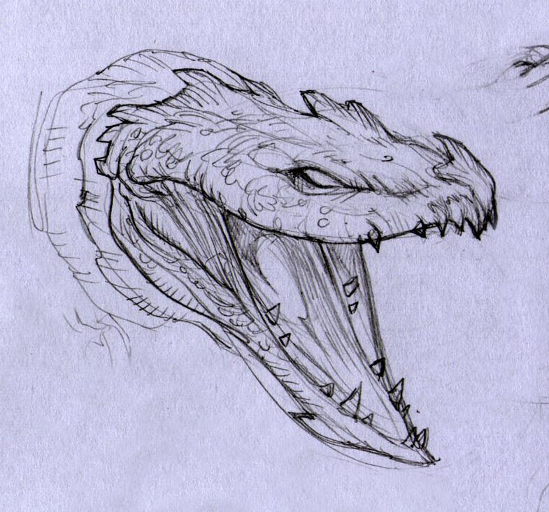 pencil drawings of dragon heads fashionplacefacecom