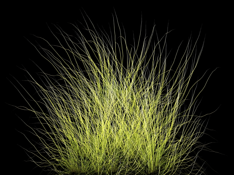 The gallery for --> Tall Grass Texture Alpha