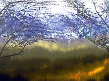 Foliage                      image 012