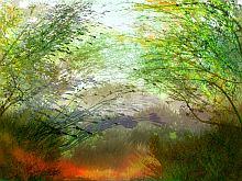 Foliage image 014